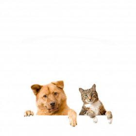 Állattartás